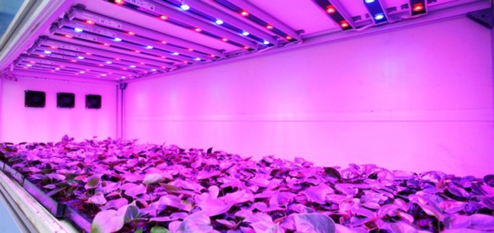 Led lights with uv produce plants with more trichome formations indoor gardening with led uv lights workwithnaturefo